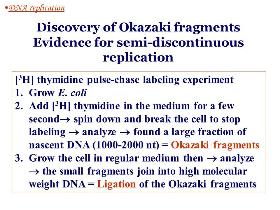 Discovery of Okazaki fragments