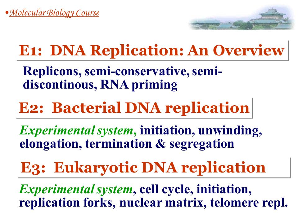 E1: DNA Replication: An Overview