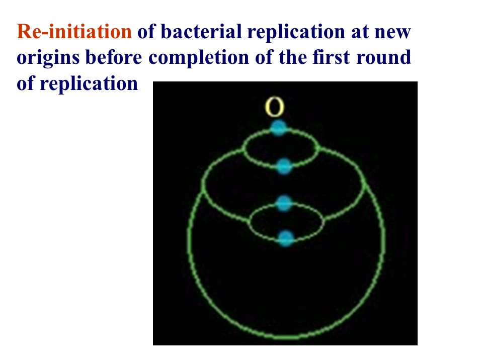 Re-initiation of bacterial replication at new origins before completion of the first round of replication