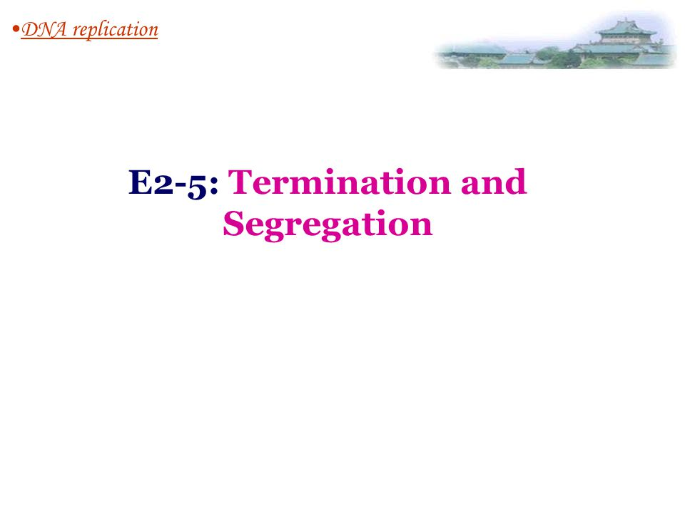E2-5: Termination and Segregation