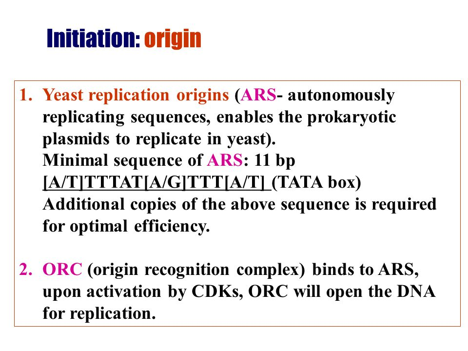 Initiation: origin Yeast replication origins (ARS- autonomously replicating sequences, enables the prokaryotic plasmids to replicate in yeast).