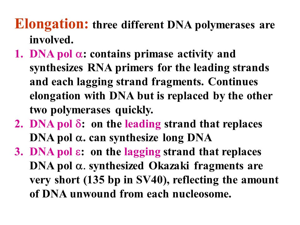 Elongation: three different DNA polymerases are involved.