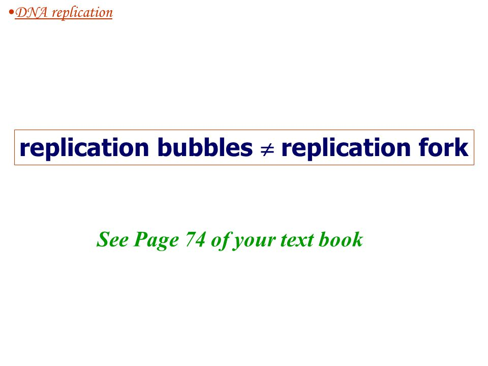 replication bubbles  replication fork