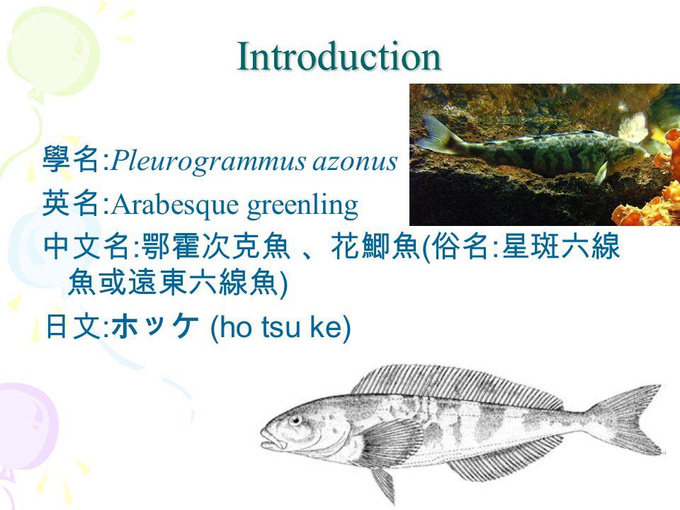 Introduction 學名:Pleurogrammus azonus 英名:Arabesque greenling 中文名:鄂霍次克魚 、花鯽魚(俗名:星斑六線魚或遠東六線魚) 日文:ホッケ (ho tsu ke)
