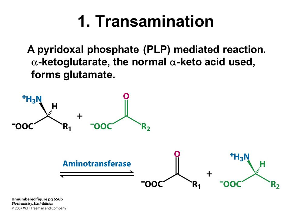 1. Transamination A pyridoxal phosphate (PLP) mediated reaction.