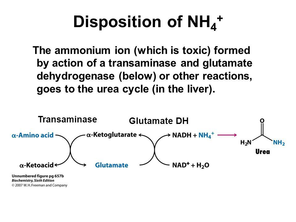 Disposition of NH4+