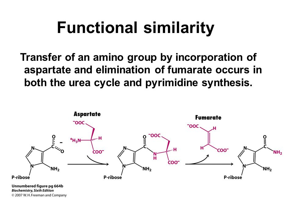 Functional similarity