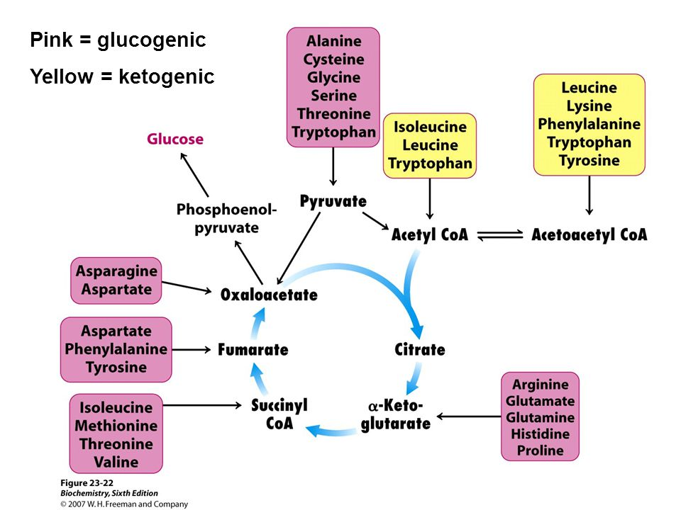 Pink = glucogenic Yellow = ketogenic