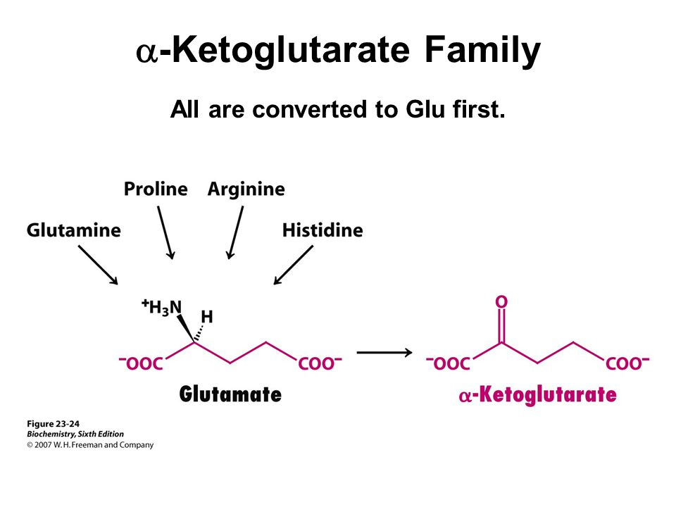 a-Ketoglutarate Family