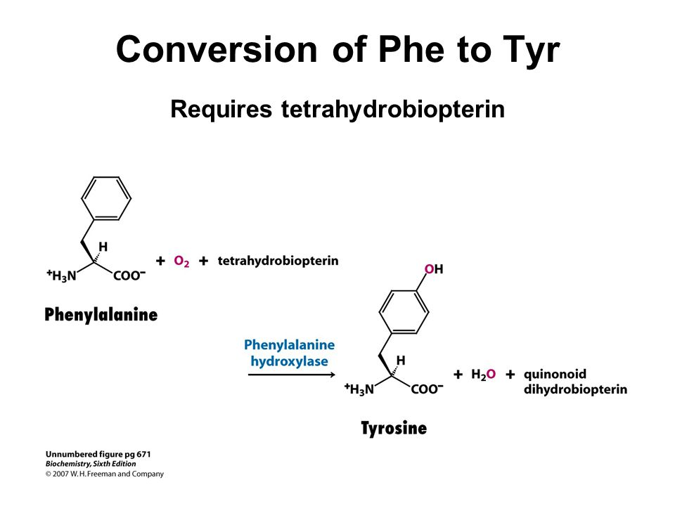 Conversion of Phe to Tyr