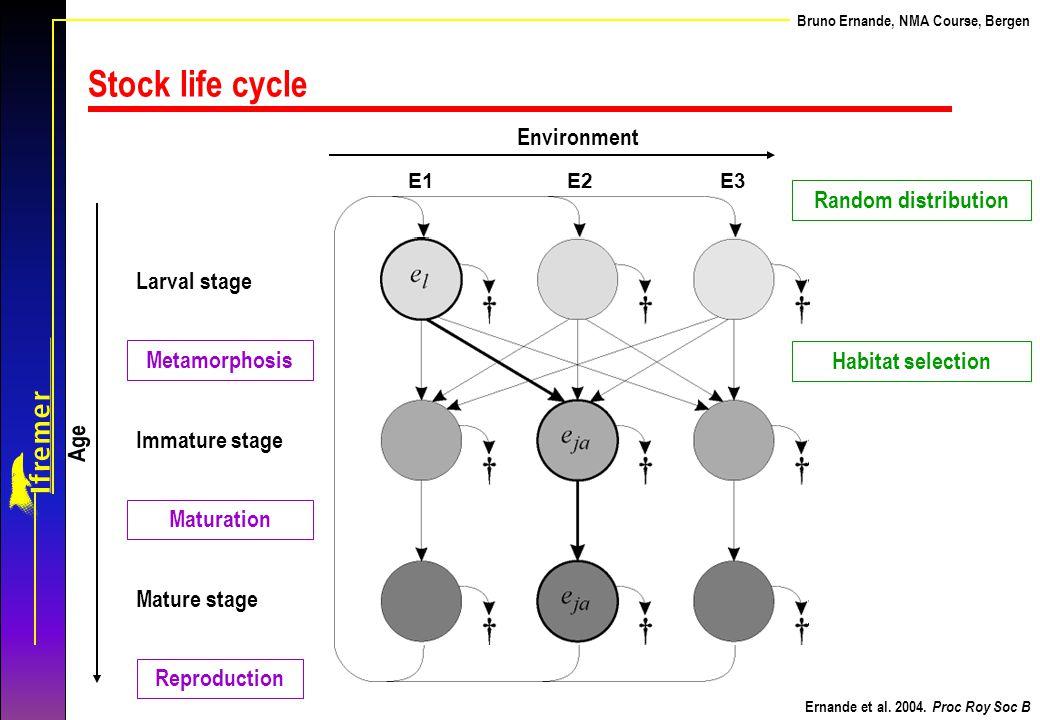 Stock life cycle Environment Random distribution Larval stage