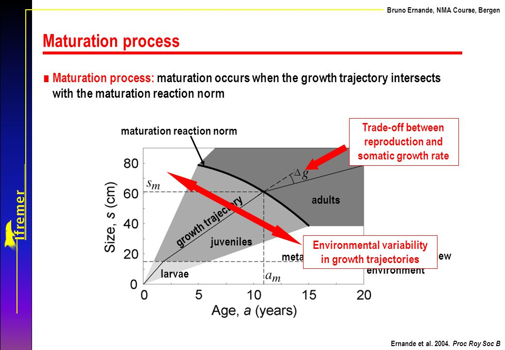 Trade-off between reproduction and somatic growth rate