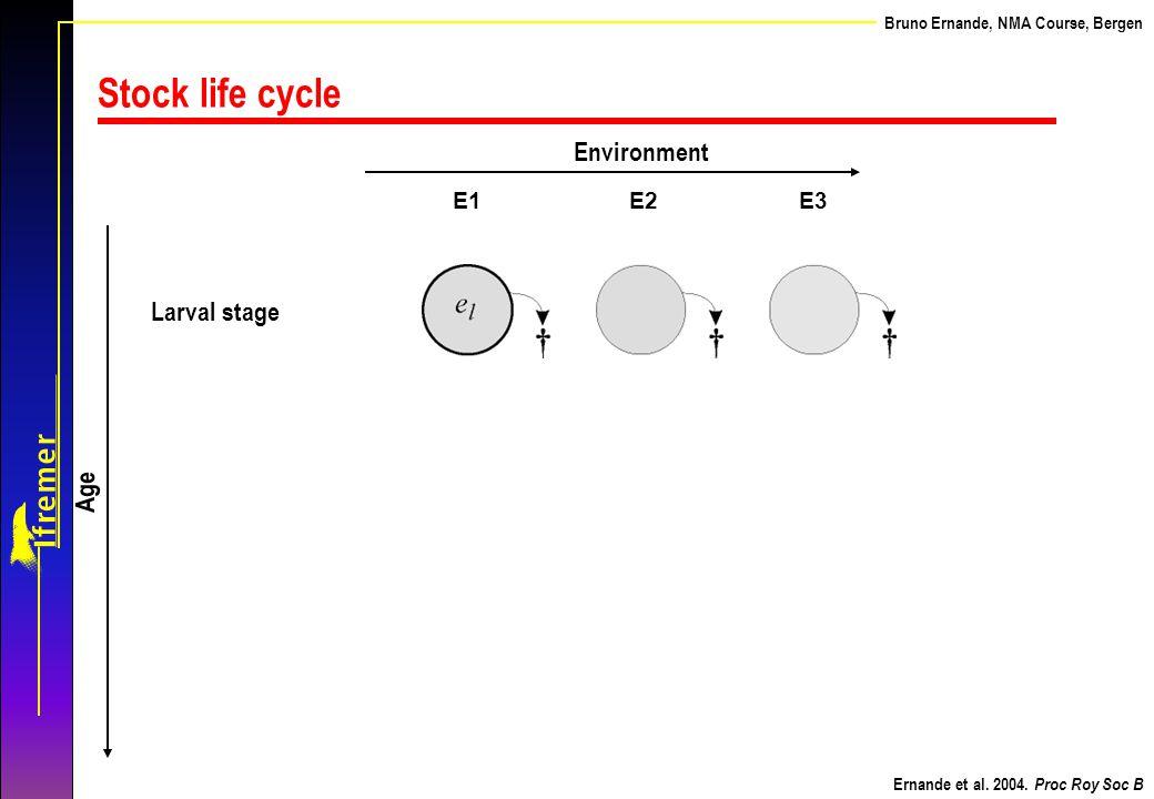 Stock life cycle Environment Larval stage Age E1 E2 E3 Ernande et al.