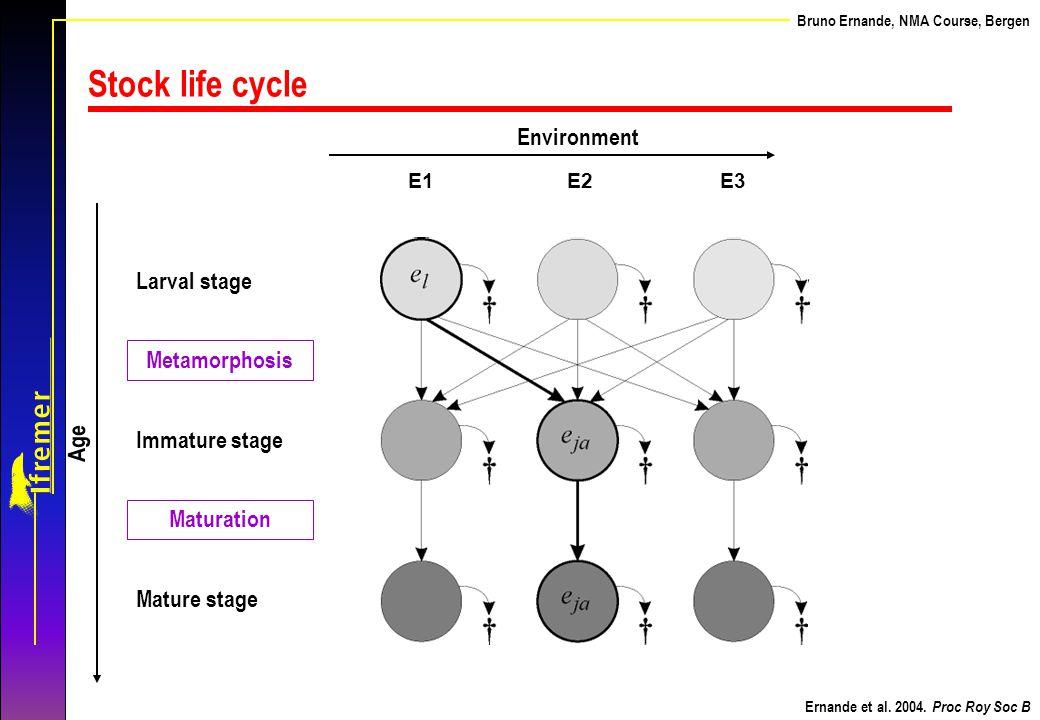Stock life cycle Environment Larval stage Metamorphosis Age