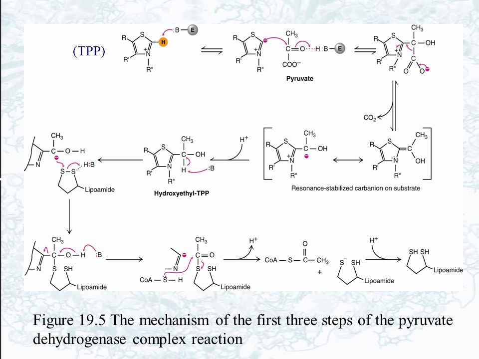 (TPP) Figure 19.5 The mechanism of the first three steps of the pyruvate dehydrogenase complex reaction.