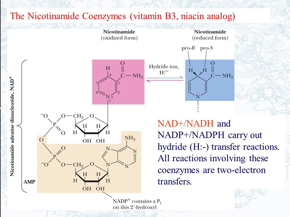 The Nicotinamide Coenzymes (vitamin B3, niacin analog)