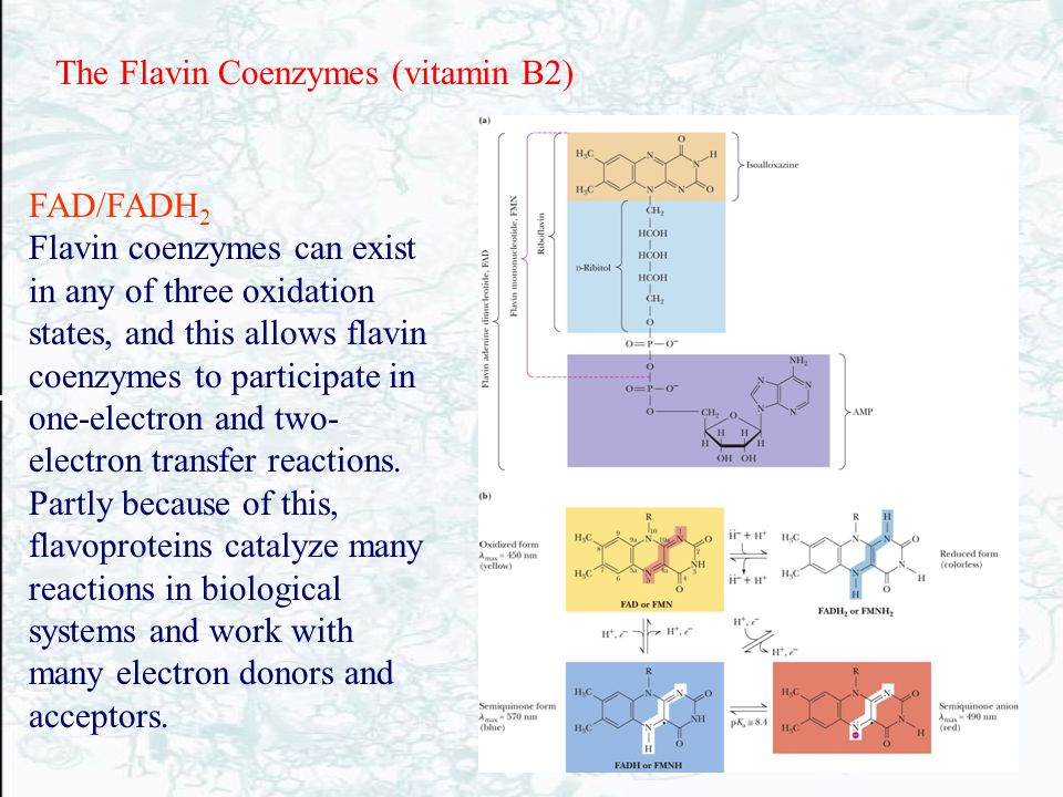 The Flavin Coenzymes (vitamin B2)