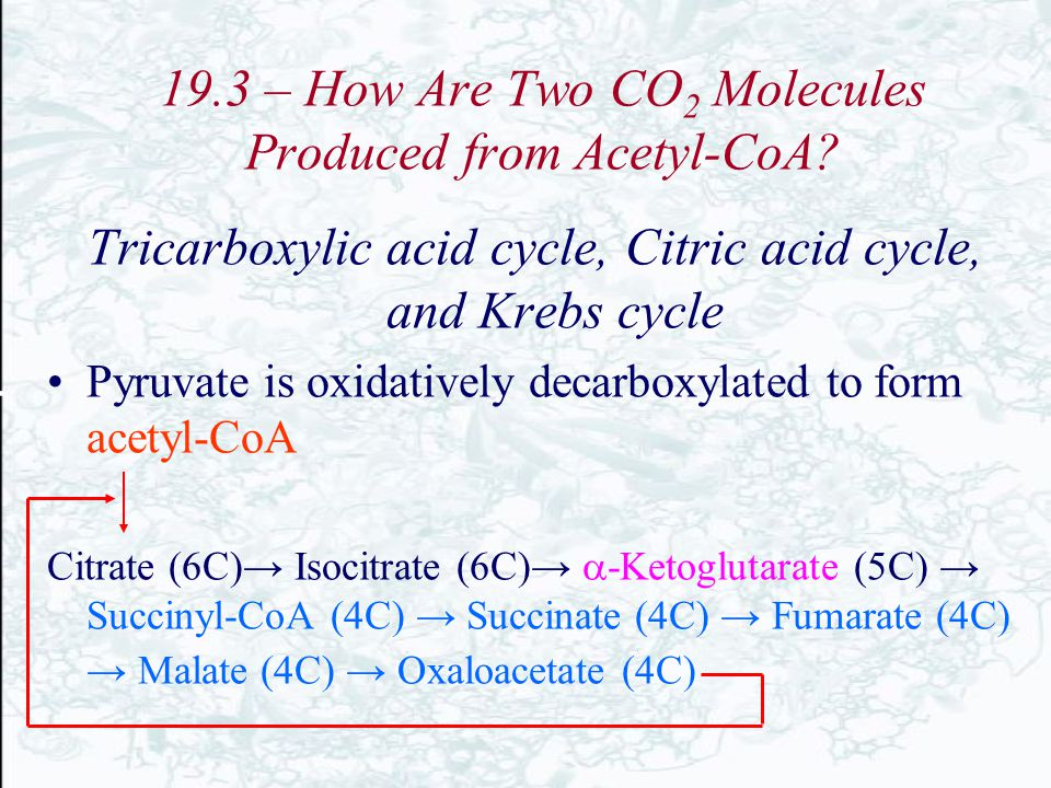 19.3 – How Are Two CO2 Molecules Produced from Acetyl-CoA