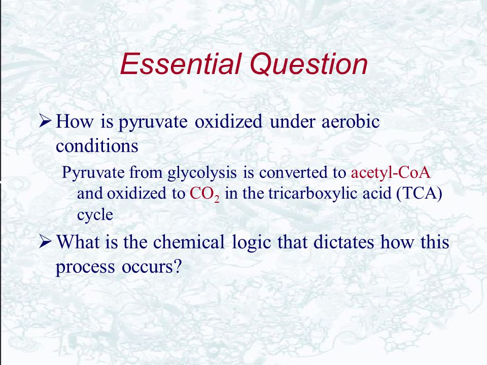 Essential Question How is pyruvate oxidized under aerobic conditions