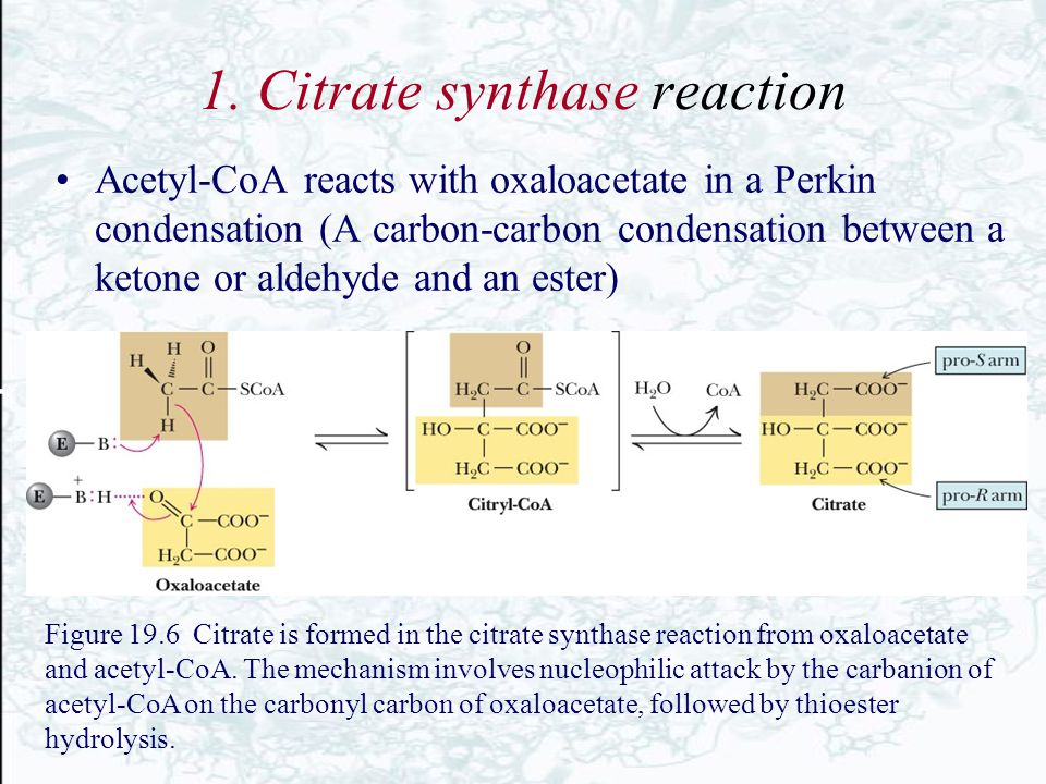1. Citrate synthase reaction