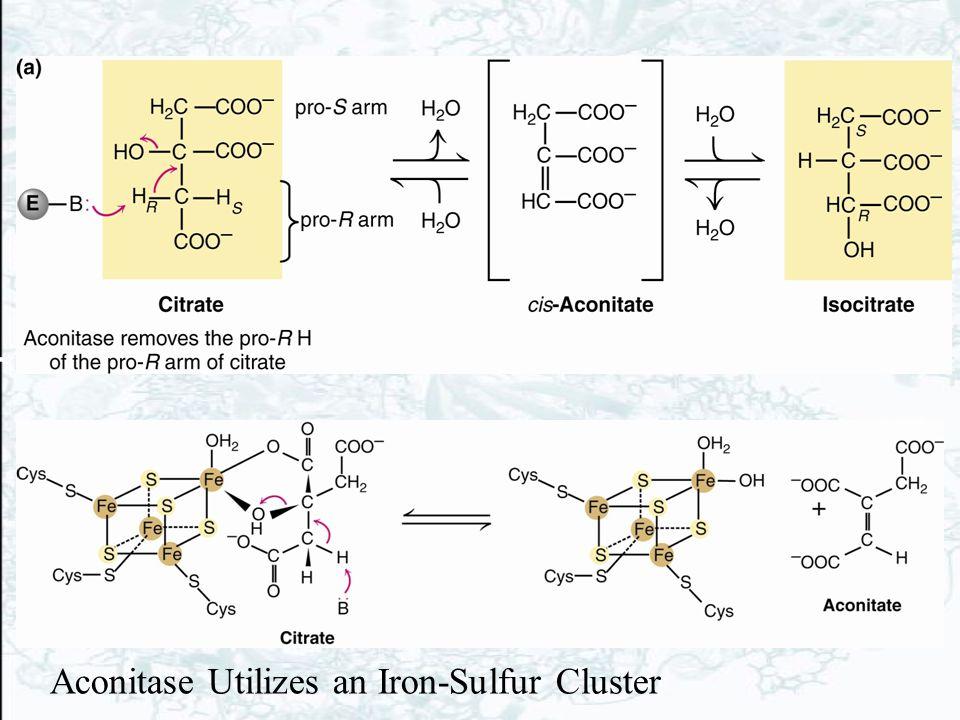 Aconitase Utilizes an Iron-Sulfur Cluster