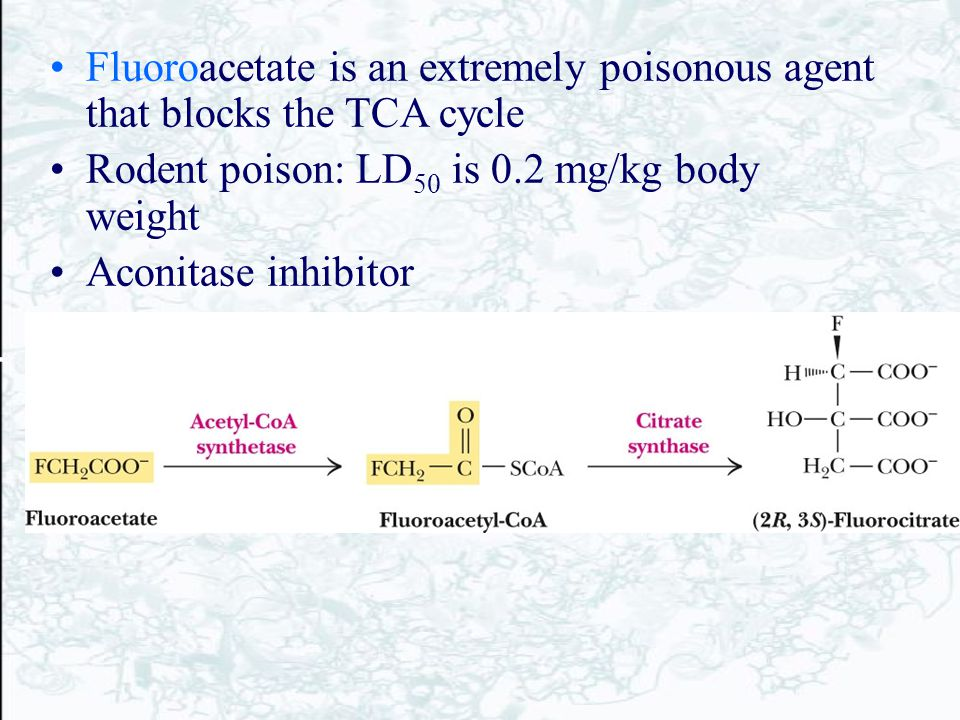 Fluoroacetate is an extremely poisonous agent that blocks the TCA cycle