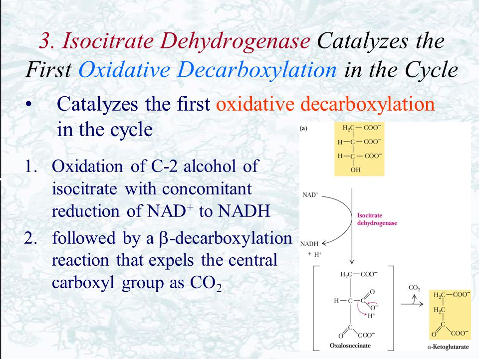 3. Isocitrate Dehydrogenase Catalyzes the First Oxidative Decarboxylation in the Cycle