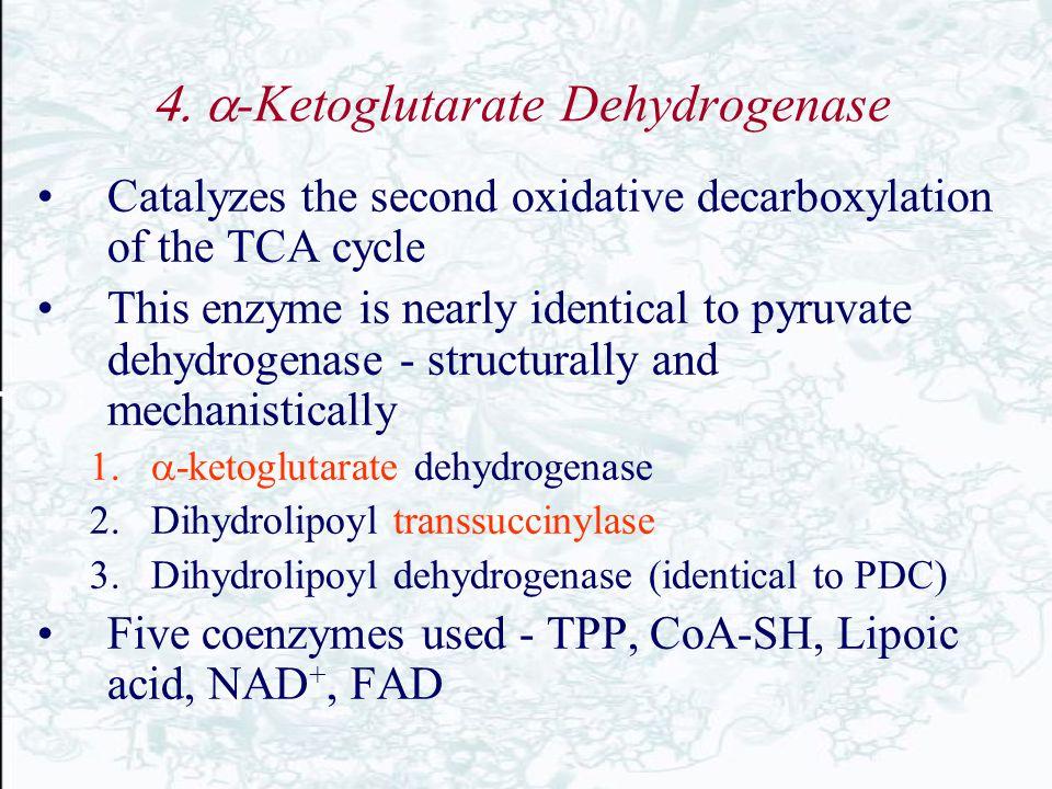 4. -Ketoglutarate Dehydrogenase