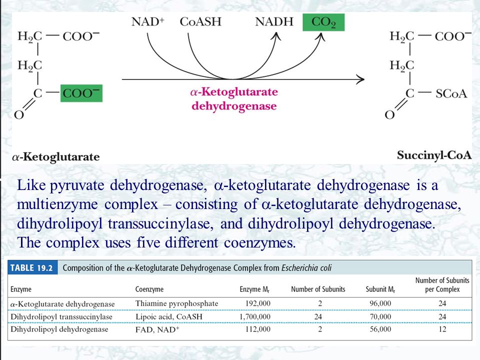 Like pyruvate dehydrogenase, -ketoglutarate dehydrogenase is a multienzyme complex – consisting of -ketoglutarate dehydrogenase, dihydrolipoyl transsuccinylase, and dihydrolipoyl dehydrogenase.