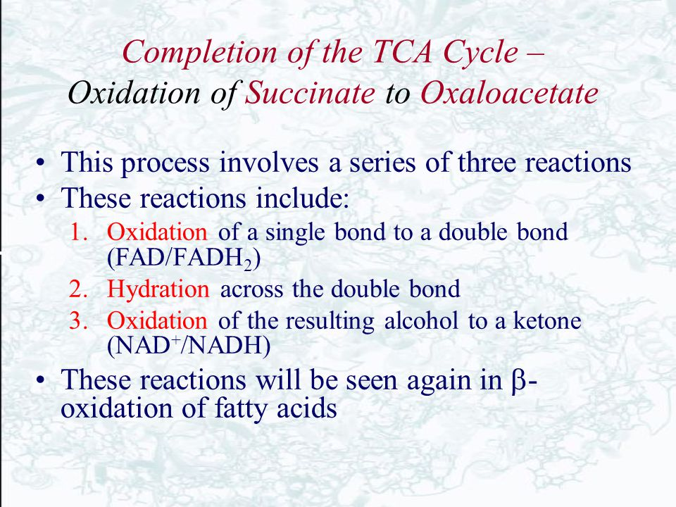 Completion of the TCA Cycle – Oxidation of Succinate to Oxaloacetate