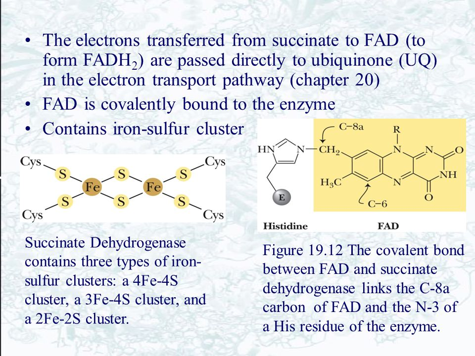 FAD is covalently bound to the enzyme Contains iron-sulfur cluster