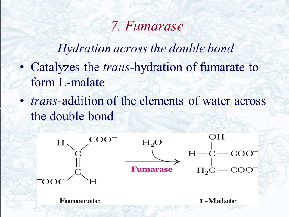 Hydration across the double bond