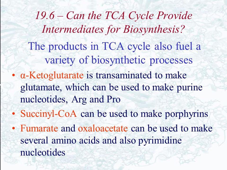 19.6 – Can the TCA Cycle Provide Intermediates for Biosynthesis