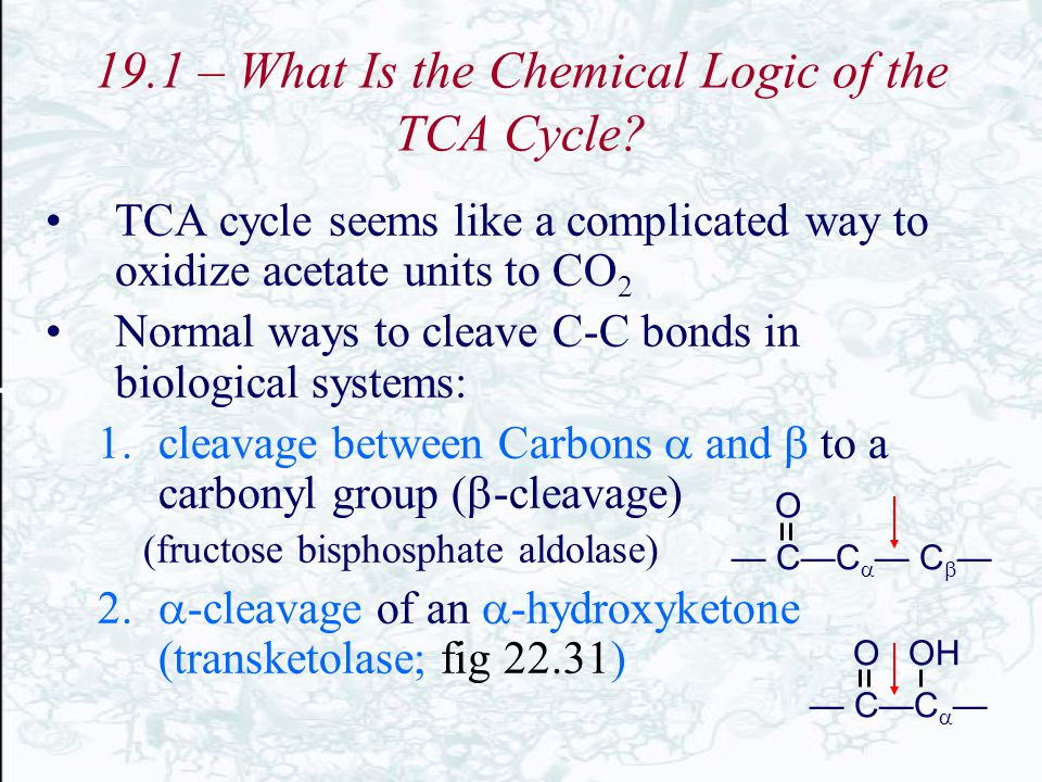 19.1 – What Is the Chemical Logic of the TCA Cycle