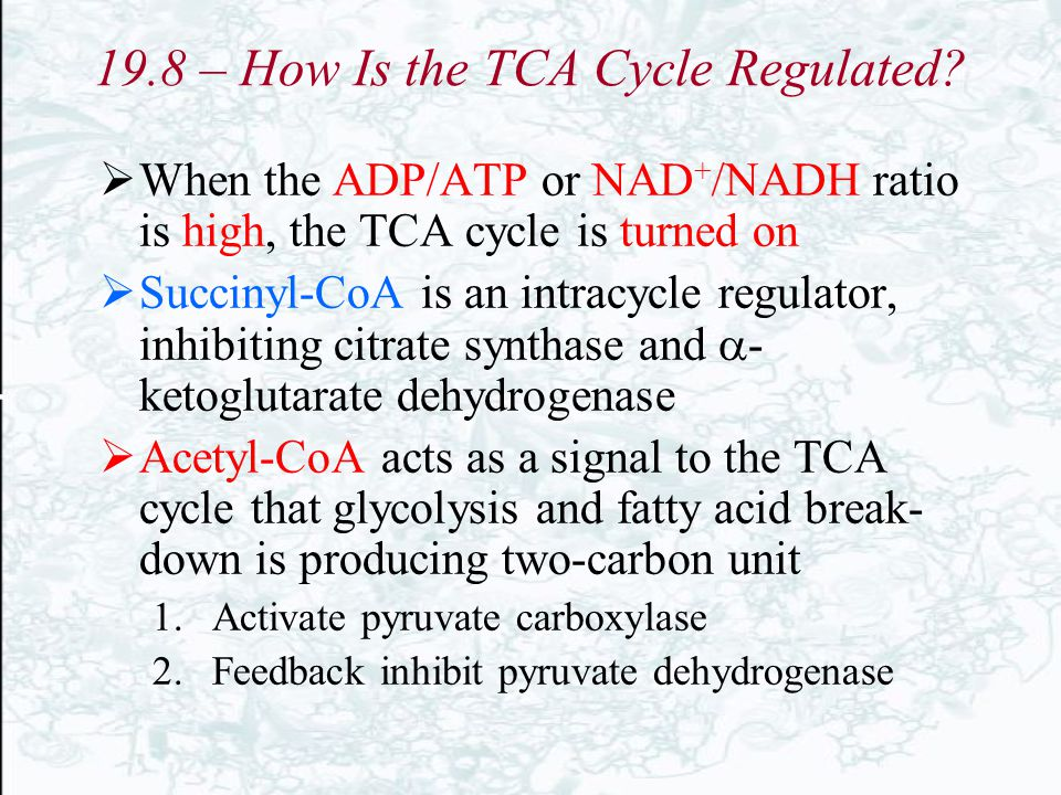 19.8 – How Is the TCA Cycle Regulated