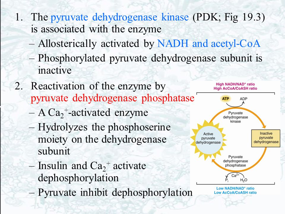 The pyruvate dehydrogenase kinase (PDK; Fig 19