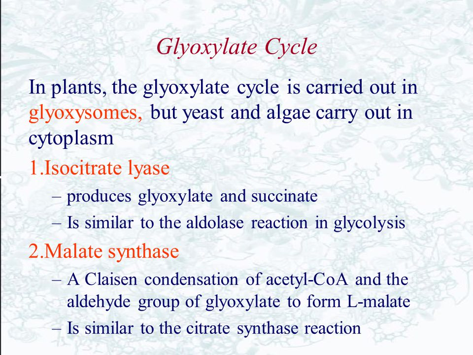 Glyoxylate Cycle In plants, the glyoxylate cycle is carried out in glyoxysomes, but yeast and algae carry out in cytoplasm.