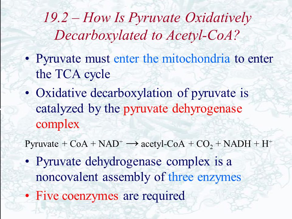 19.2 – How Is Pyruvate Oxidatively Decarboxylated to Acetyl-CoA