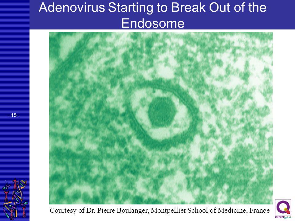 Adenovirus Starting to Break Out of the Endosome