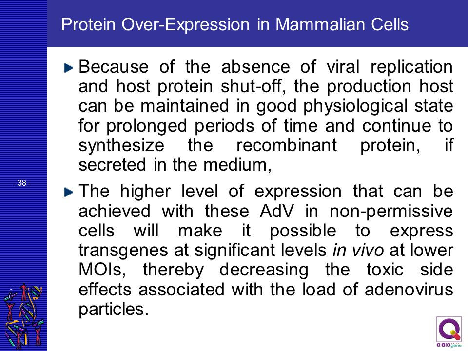 Protein Over-Expression in Mammalian Cells