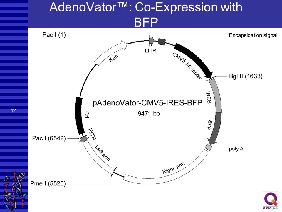 AdenoVator™: Co-Expression with BFP