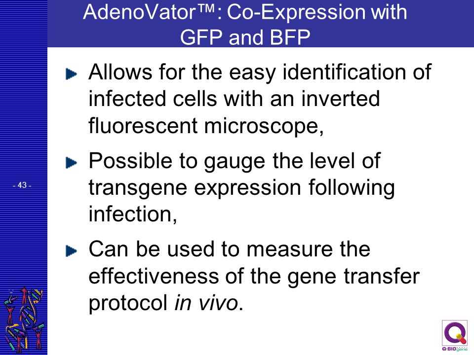 AdenoVator™: Co-Expression with GFP and BFP