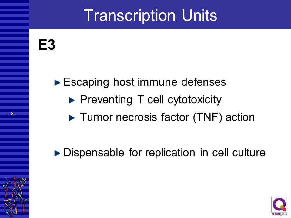 Transcription Units E3 Escaping host immune defenses