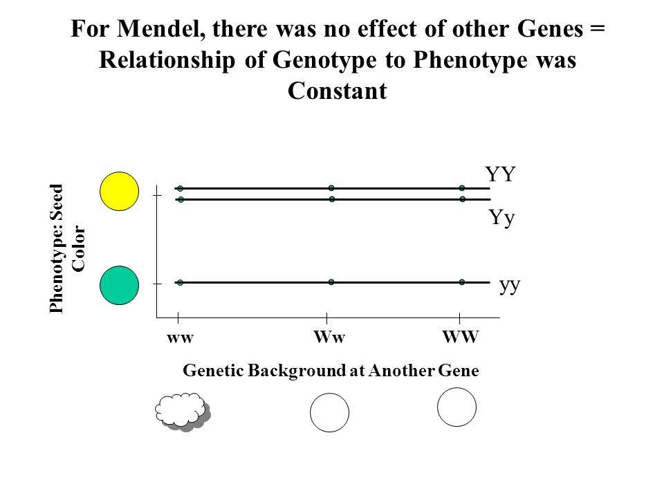 For Mendel, there was no effect of other Genes =