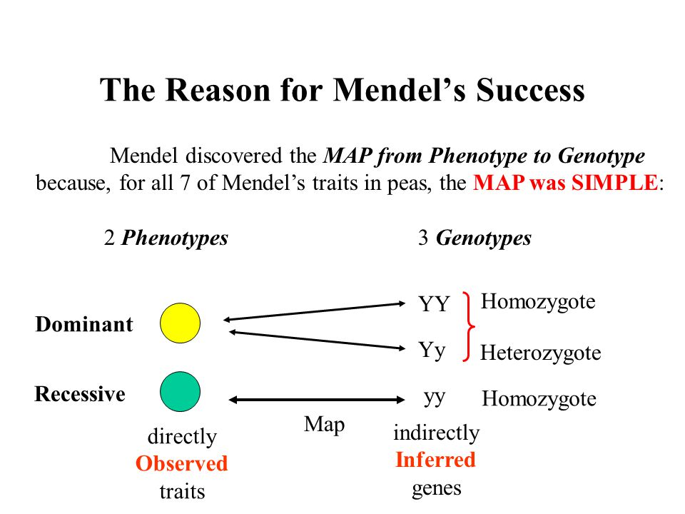 The Reason for Mendel's Success