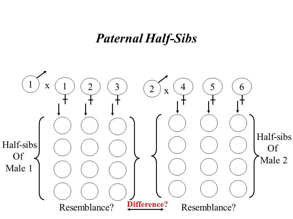 Paternal Half-Sibs 1 x 2 3 4 5 6 2 x Half-sibs Of Male 2 Half-sibs Of