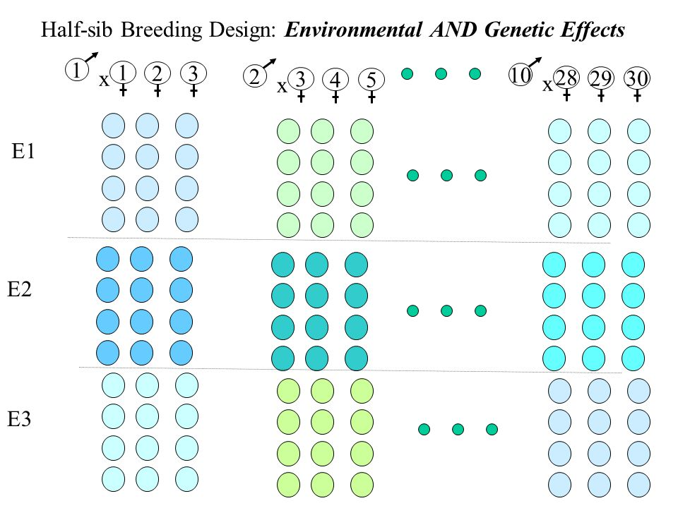 Half-sib Breeding Design: Environmental AND Genetic Effects