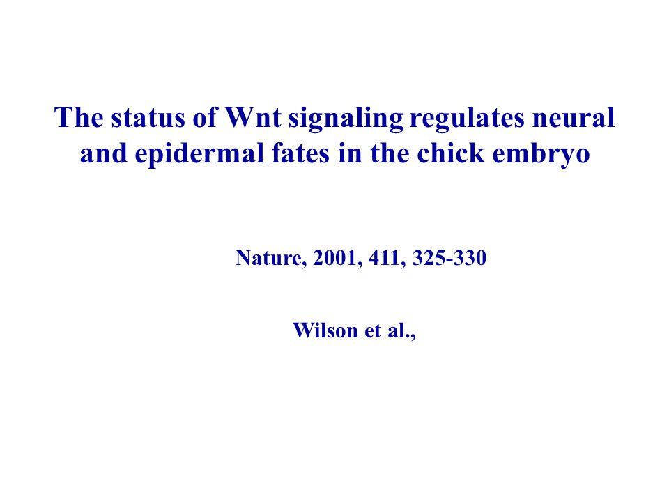 The status of Wnt signaling regulates neural and epidermal fates in the chick embryo
