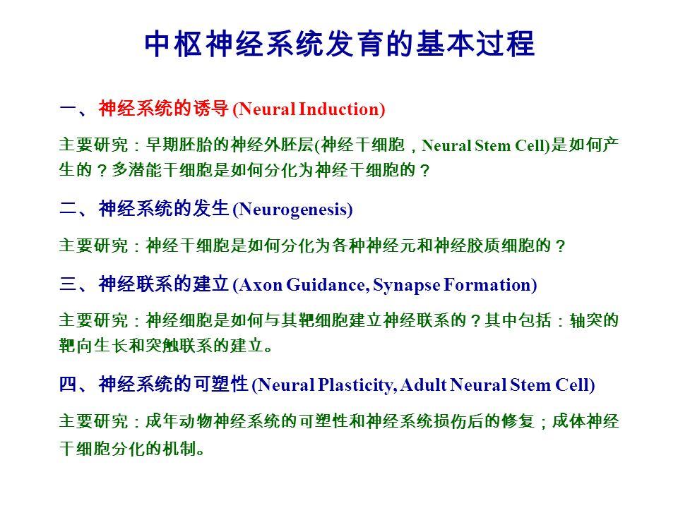 中枢神经系统发育的基本过程 一、神经系统的诱导 (Neural Induction) 二、神经系统的发生 (Neurogenesis)
