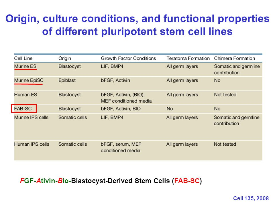 Origin, culture conditions, and functional properties of different pluripotent stem cell lines